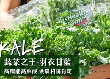 """蔬菜之王""""羽衣甘藍"""",葉酸含量超乎想像!"""